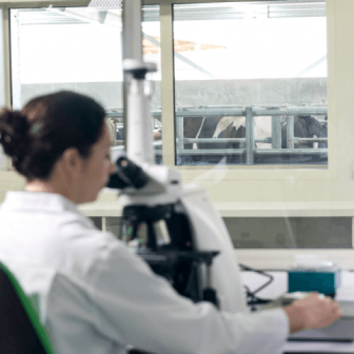 A woman in a lab coat looks into a microscope