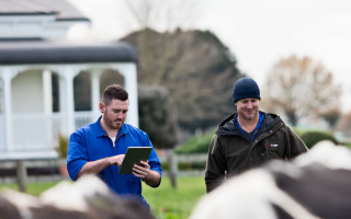 Two men stand in front of some dairy cows, one man holds a tablet